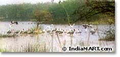 sultanpur-sanctuary-haryana.jpg